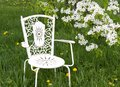 Chair near to blossoming pear Stock Photography