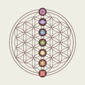 Chakra icons on sacred geometry design zen concept illustration seven main placed flower of life eps vector Stock Images