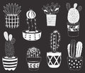 Chalkboard Cactuses Potted Plants Elements