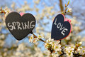 Chalkboard heart spring love flower two board in the shape of a with the text and and white blossom Stock Image