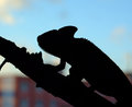 Chameleon in the city a shadow with background Royalty Free Stock Photos