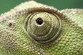 Chameleon eye close up Royalty Free Stock Photo
