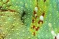Chameleon skin Royalty Free Stock Photo