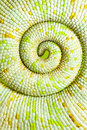 Chameleon tail Royalty Free Stock Images