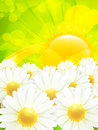 Chamomile background Royalty Free Stock Images