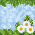 Chamomile background Royalty Free Stock Photography