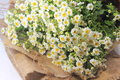 Chamomile bouquet on rough cloth Stock Photo