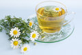 Chamomile drug herbal tea of healing drink Stock Photo