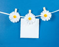 Chamomile flower clothespins with blank paper on blue background Royalty Free Stock Photo