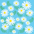 Chamomile Flowers On A Blue Background. Seamless Vector Illustrations. Chamomile Flowers For Sale.