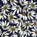 Chamomile flowers. Seamless vector patern with isolated plants.