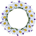 Chamomile i hand-bell. Kwiat struktura Obrazy Stock
