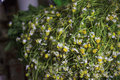 Chamomile plant a pile of used to prepare tea at sale in a market Royalty Free Stock Photo