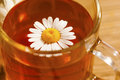Chamomile tea cup of herbal with flowers Stock Image