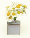 Chamomile in a vase Royalty Free Stock Photos