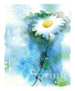 Chamomile watercolor illustration of the Stock Images