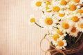 Chamomile wild flowers bouquet in vintage stile Royalty Free Stock Photo