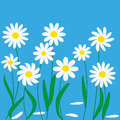 Chamomiles illustrations and art fun flowers Royalty Free Stock Photos