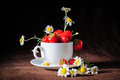 Chamomiles and strawberries in the cup white coffee rays of sunlight on dark brown background Stock Images
