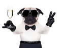 Champagne glass dog Royalty Free Stock Photo