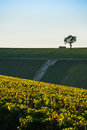 Champagne vineyards in the cote des bar aube area of department ardennes france europe Royalty Free Stock Photo