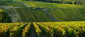 Champagne vineyards in the cote des bar aube area of department ardennes france europe Stock Photography
