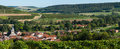 Champagne vineyards in the cote des bar aube area of department near to arrentieres ardennes france europe Royalty Free Stock Images
