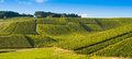 Champagne vineyards in the cote des bar aube area of department near to les riceys ardennes france europe Stock Photography