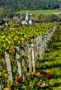 Champagne vineyards in the cote des bar aube area of department near to les riceys ardennes france europe Stock Images