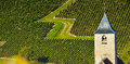 Champagne vineyards in the cote des bar aube area of department near to viviers sur artaut ardennes france europe Stock Image