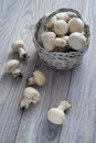 Champignon de paris Images stock