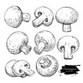 Champignon mushroom hand drawn vector illustration set. Sketch f