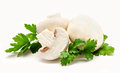 Champignon mushroom white agaricus witn parsley Royalty Free Stock Photography