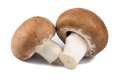 Champignon mushroom on white background two brown mushrooms Royalty Free Stock Image