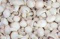 Champignon mushrooms Royalty Free Stock Photo