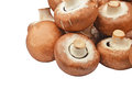 Champignon (True mushroom) Royalty Free Stock Photo
