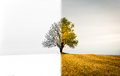 The change between seasons. A lonely tree that is both winter, s Royalty Free Stock Photo