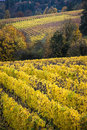 Changing vineyard leaves in fall willamette valley oregon Stock Photo