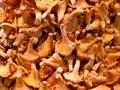 Chanterelle sklepu spożywczego sklepu grzybów Zdjęcie Royalty Free