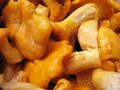 Chanterelles Stock Image