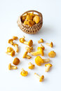 Chanterelles in a wicker basket Stock Photography
