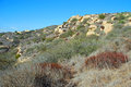 Chaparral in laguna canyon laguna beach ca image shows a typical biome california is a shrubland plant community found Royalty Free Stock Photo