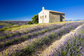Chapel with lavender field Stock Images