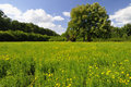Chapel on the meadow Royalty Free Stock Photo