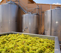 Chardonnay winemaking with grapes and tanks fermentation stainless steel vessels Royalty Free Stock Photos