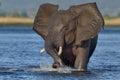 Charging Elephant Royalty Free Stock Photo