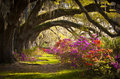 Charleston SC Plantation Flowers Oak Trees Moss Royalty Free Stock Photo