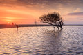Charleston south carolina folly beach sunrise on near shines on an inland pool of water surrounding a tree and a silhouette of a Stock Images