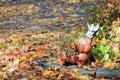 Charming Fall Garden Scene Royalty Free Stock Photo