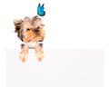 Charming Puppy with blue butterfly above billboard Royalty Free Stock Photo